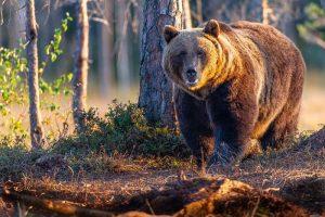 fauna, etica in aer liber
